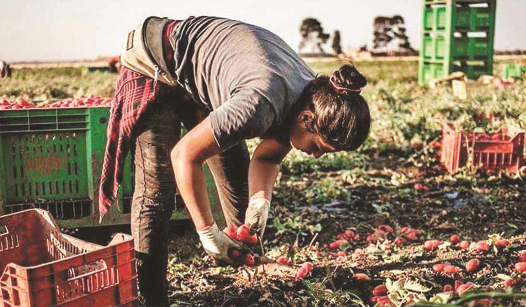 Operai impegnati nella raccolta nei campi