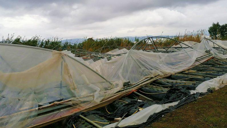 Maltempo, tromba d'aria a Curinga nel Catanzarese, danni ingenti alle colture