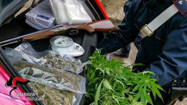 Mille piante di marijuana e un fucile, arrestata un'intera famiglia nel Reggino