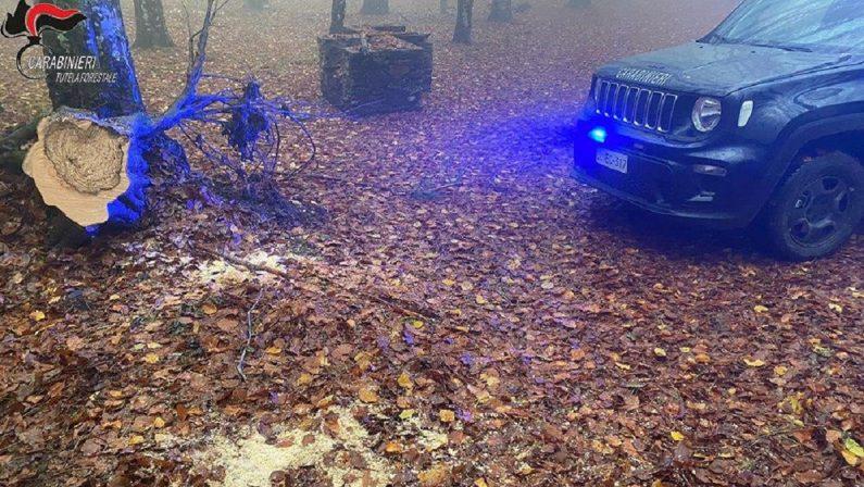 Arrestato un uomo nel Cosentino per furto di legna