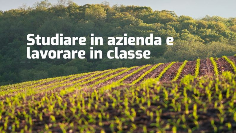La Fondazione PINTA organizza corsi di tecnico superiore nel settore agroalimentare, enogastronomia e del food
