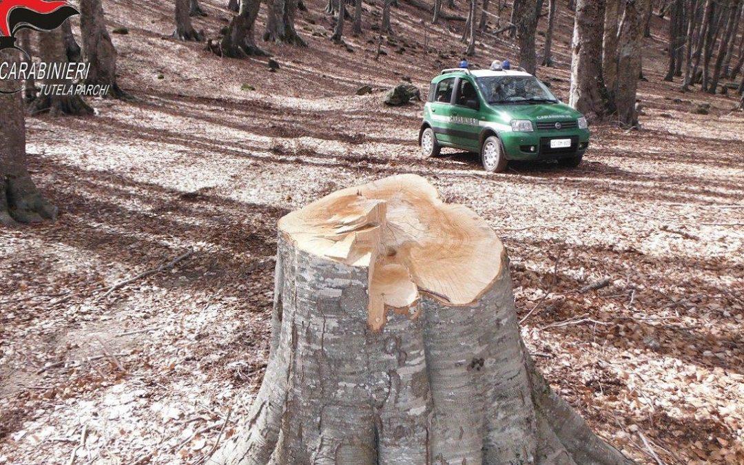 Tre persone denunciate nel Crotonese per taglio di alberi e manufatti edilizi abusivi