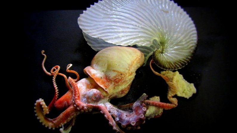 """Mollusco dell'anno: la """"Dohrn"""" di Napoli porta in semifinale il polpo Argonauta"""
