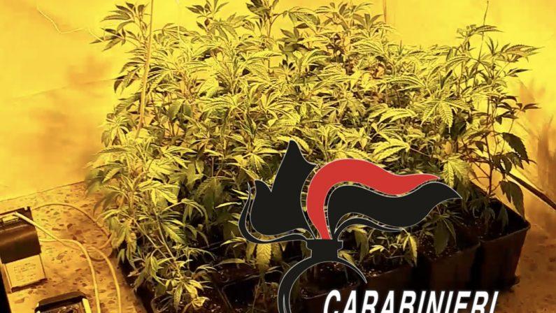 SCAMPIA: coltiva marijuana in uno stanzino di casa. 36enne arrestato dai Carabinieri