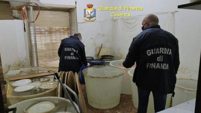 Grappa prodotta clandestinamente a Cosenza, sequestrata una distilleria abusiva