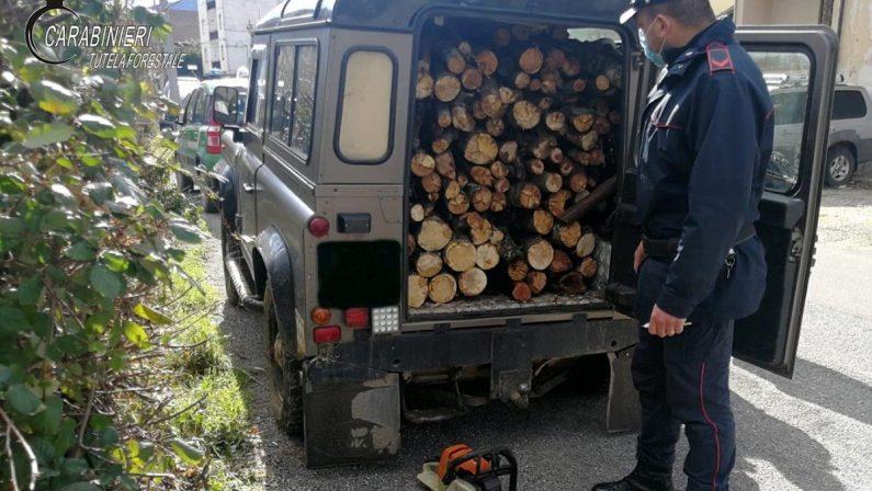 Denunciato un uomo per furto di legna: oltre 10 quintali di faggio sequestrati nel Cosentino