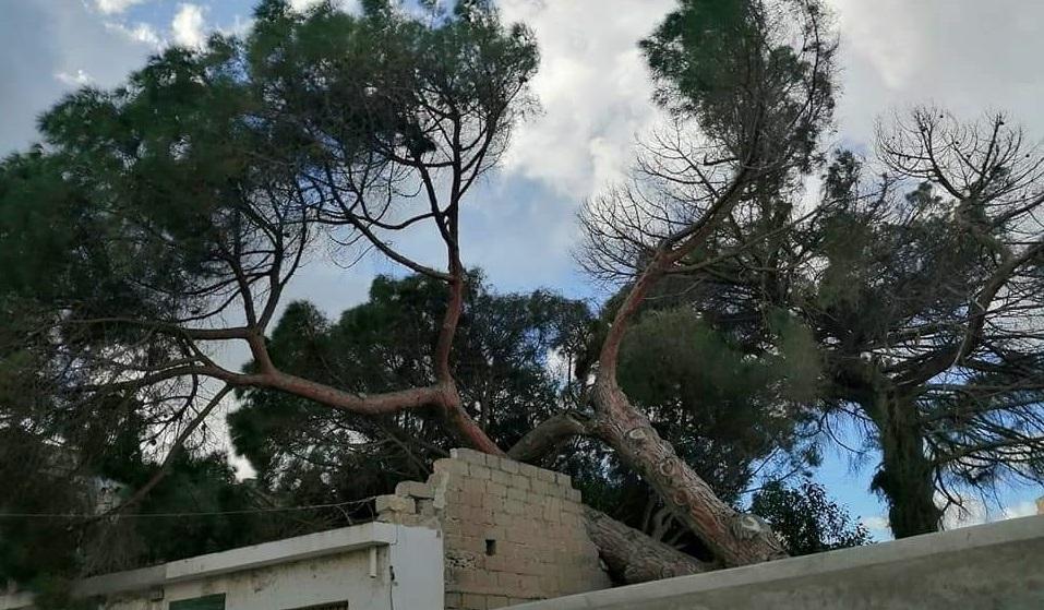 Un albero abbattuto dal vento a Tropea