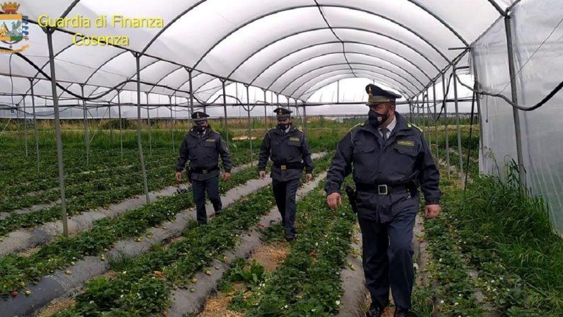 Agricoltura, mancata dichiarazione giornate lavorative, 67 denunce