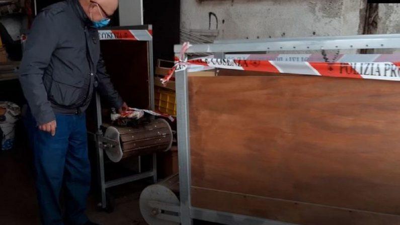 Allevamento clandestino di cani pitbull nel Cosentino, una denuncia - VIDEO