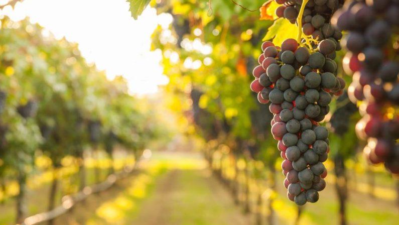 Milano wine week, la Camera di commercio di Vibo offre voucher ai produttori locali