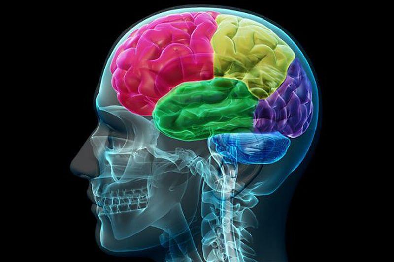 Il cervello a riposo ottimizza le proprie prestazioni future