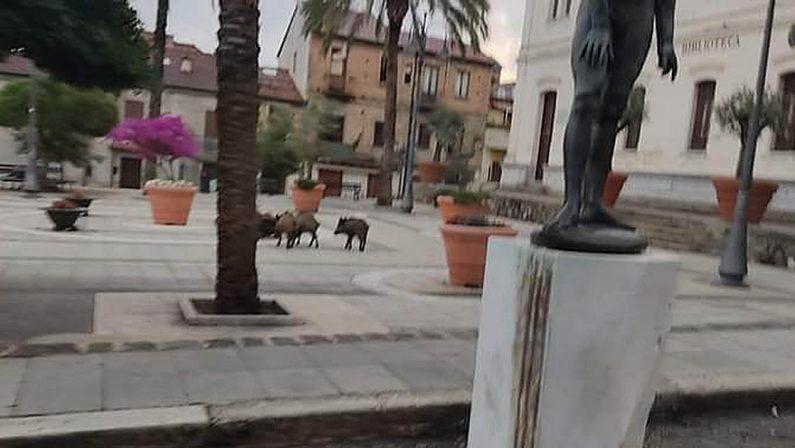 Cinghiali a spasso nel centro cittadino a Soriano, è ancora allarme