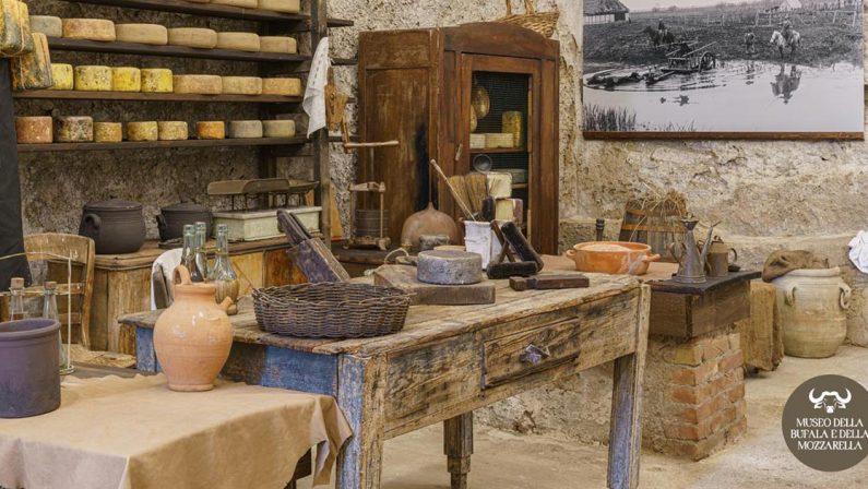 A Battipaglia nasce il Museo della Bufala e della mozzarella