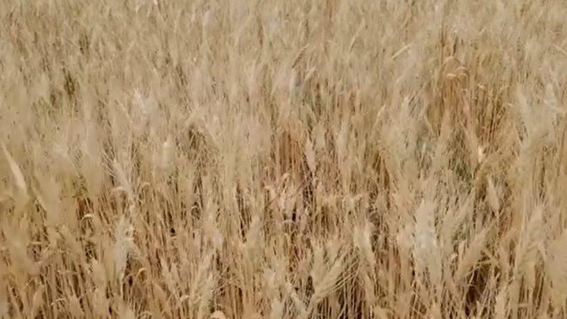 Biologicamente, da Paestum via al progetto per informare sulla sana agricoltura