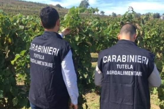 Sicurezza alimentare, sequestri di liquori nel Cosentino: mancato rispetto della Dop