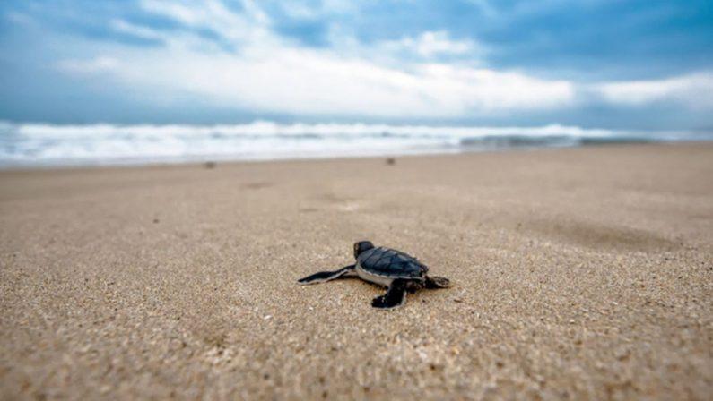 Fauna a rischio sulle spiagge calabresi, il Wwf: «Fermate quelle ruspe»