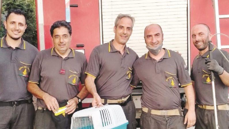 Gattina salvata dai vigili del fuoco a Lamezia Terme