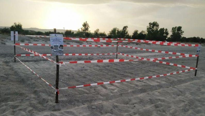 """Nidi di """"Caretta caretta"""" sulle spiagge della Riviera degli angeli tra Badolato e Isca"""