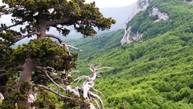 Le foreste di Pollino e Aspromonte sono patrimonio dell'umanità Unesco