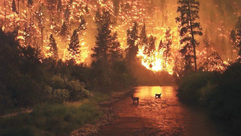 La difficile convivenza fra agricoltura e fotovoltaico, così spuntano gli incendi