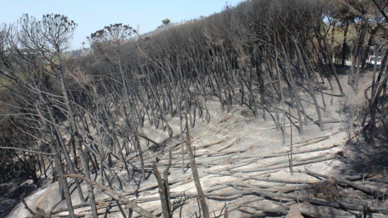 Emergenza incendi, il caso: convenzione scaduta, la pineta di Siano poteva essere preservata