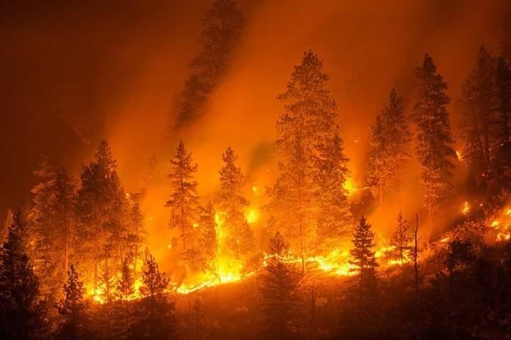 Emergenza incendi nel Reggino, vertice in Prefettura: in arrivo rinforzi della Protezione civile