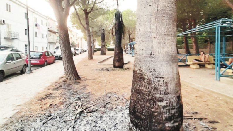 Cosenza, palme bruciate nel parco comunale di Fuscaldo