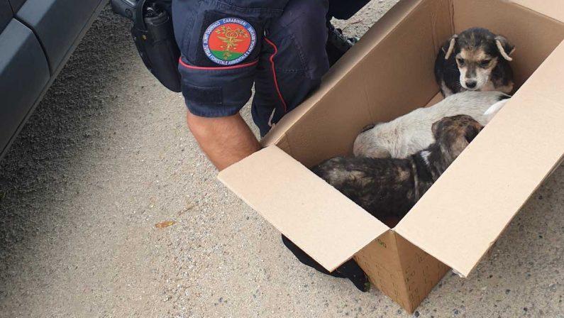 Cuccioli di cane abbandonati vengono salvati da un gruppo di ciclisti nel Vibonese