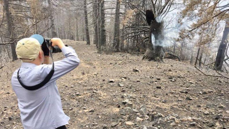 Il fotografo McCurry nell'Aspromonte colpito dalla catastrofe incendi