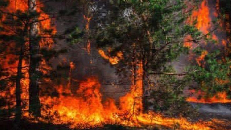 Incendi, ad Acri si scappa dalle case: circa 80 ordinanze di evacuazione