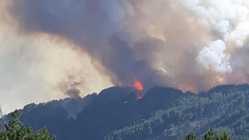 L'Aspromonte brucia, in fumo la macchia di Farnetto ad Africo Vecchio