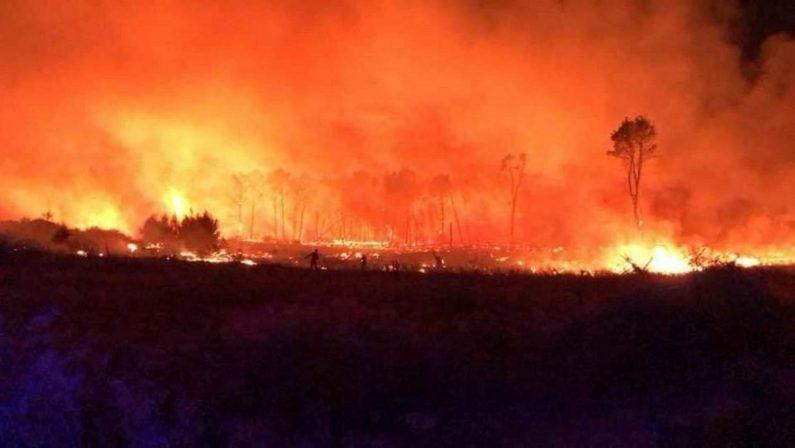 Isola Capo Rizzuto, in fiamme la pineta di Sovereto: evacuato un campeggio