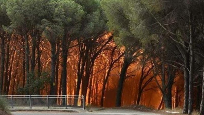 C'è un'economia che gira attornoallo spegnimento degli incendi