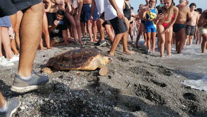 Cetraro, curata e riportata in acqua la tartaruga Mariachiara
