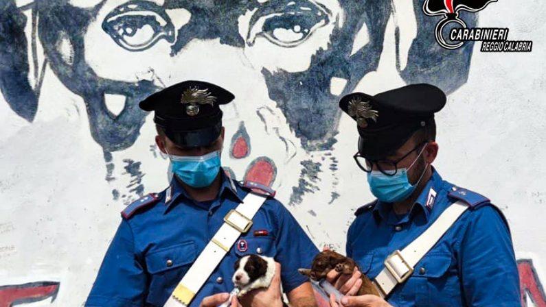 Sette cuccioli di cane salvati dai carabinieri, denunciato giovane per abbandono di animali