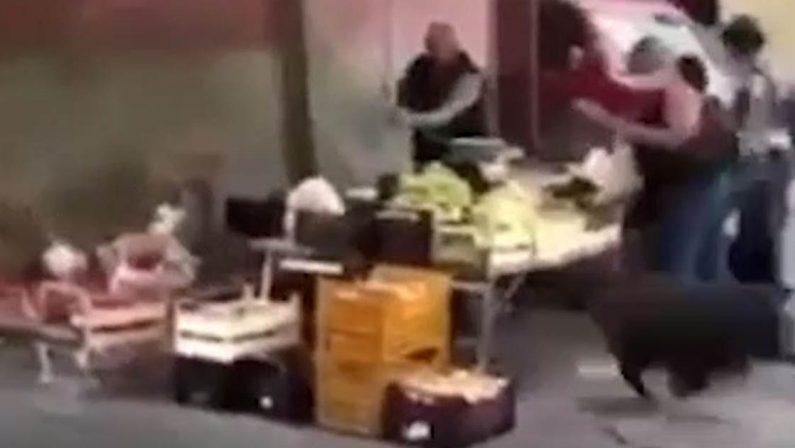 """Soriano, cinghiali """"invadono"""" il mercato settimanale - VIDEO"""
