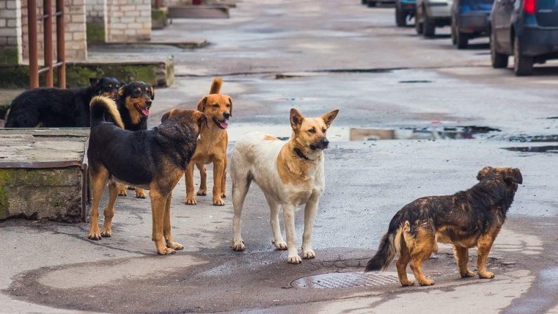 Donna aggredita dai cani a Vibo Valentia e salvata da un pensionato