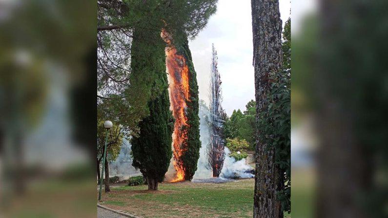 Rende, a fuoco due alberi nel Parco Robinson