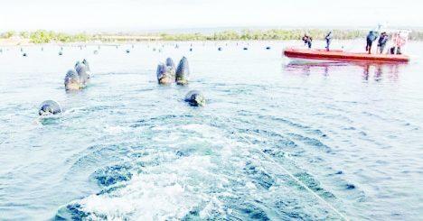 Interi impianti abusivi di cozze sequestrati nel mare di Taranto