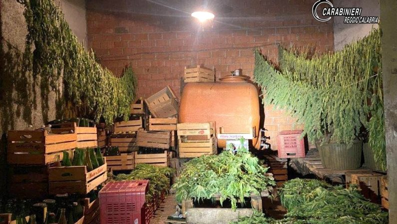 """Coltivavano canapa nel Reggino in aziende autorizzate, ma trasformavano """"erba"""" illegalmente"""